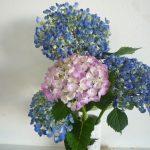 ❀桜町に咲く花❀ デイサービス五幸 桜町